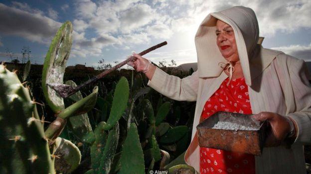 Fazendeira coleta insetos cochonilha de um cacto | Foto: Alamy